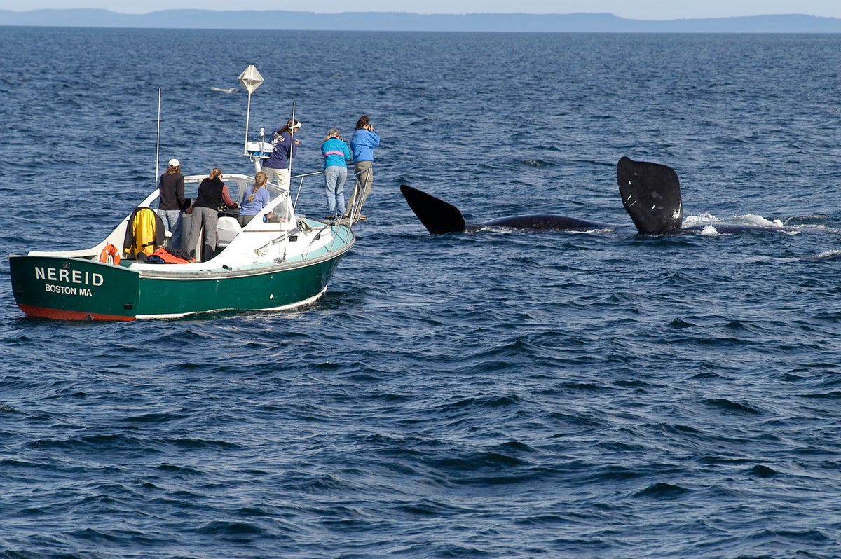 Direct Donation to Right Whale Research Program