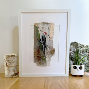 Image of Pileated WOODPECKER 2 on birch original
