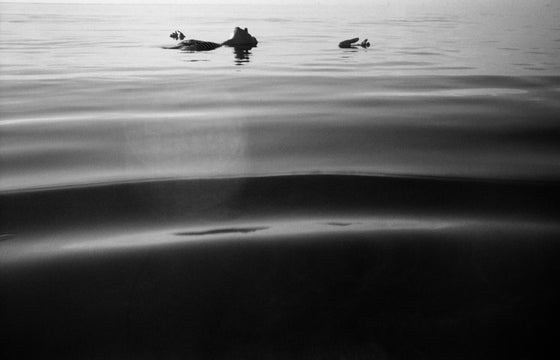 "Image of From the series ""Mares rotos"" BW"