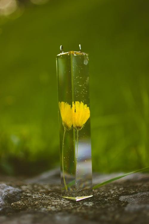 Image of Marigold (Calendula officinalis) - Suncatcher Prism