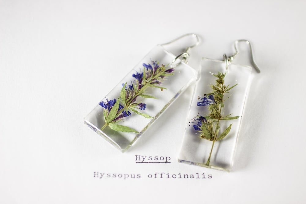 Image of Hyssop (Hyssopus officinalis) - Pressed Earrings #2