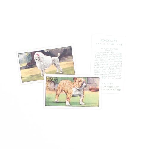Image of Dogs Cigarette Cards - Set of 8 or Complete Set