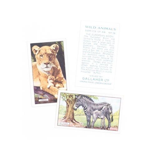 Image of Wild Animals Cigarette Cards - Set of 8