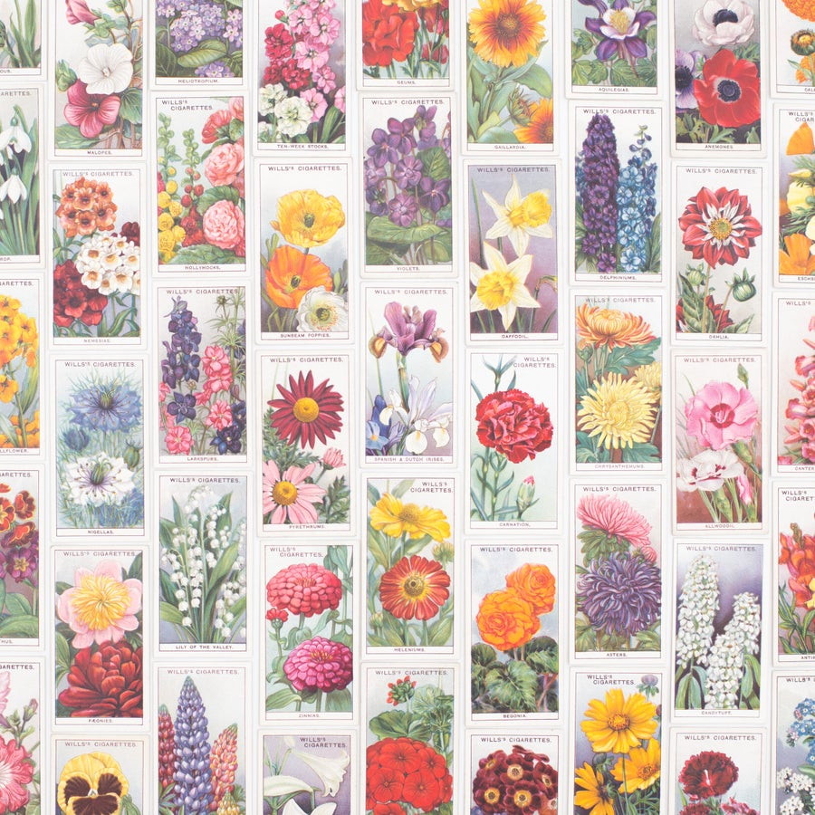 Image of Garden Flowers Cigarette Cards - Set of 8