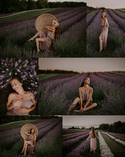 Image of Lavender Mini Sessions