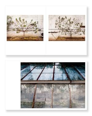 Garden Stories - Amanda Harman