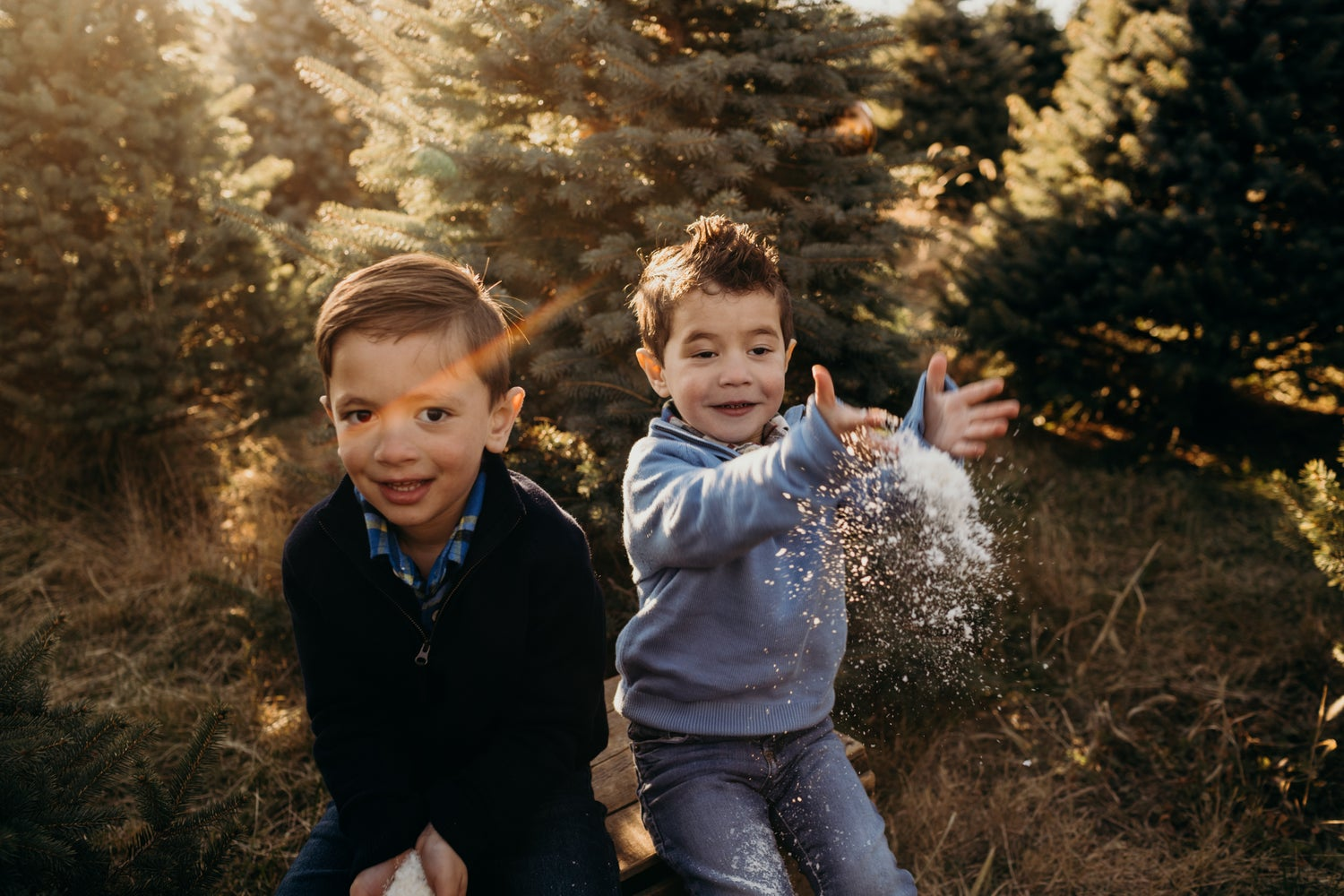 Image of DEPOSIT: 2020 Christmas Minis at GAVER FARM 11/15 (Mt Airy, MD)