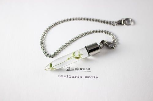 Image of Chickweed (Stellaria media) - Medium #1