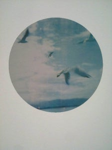 Image of Flock