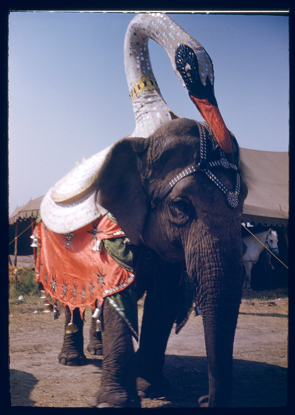 Image of Circus Elephant With Swan