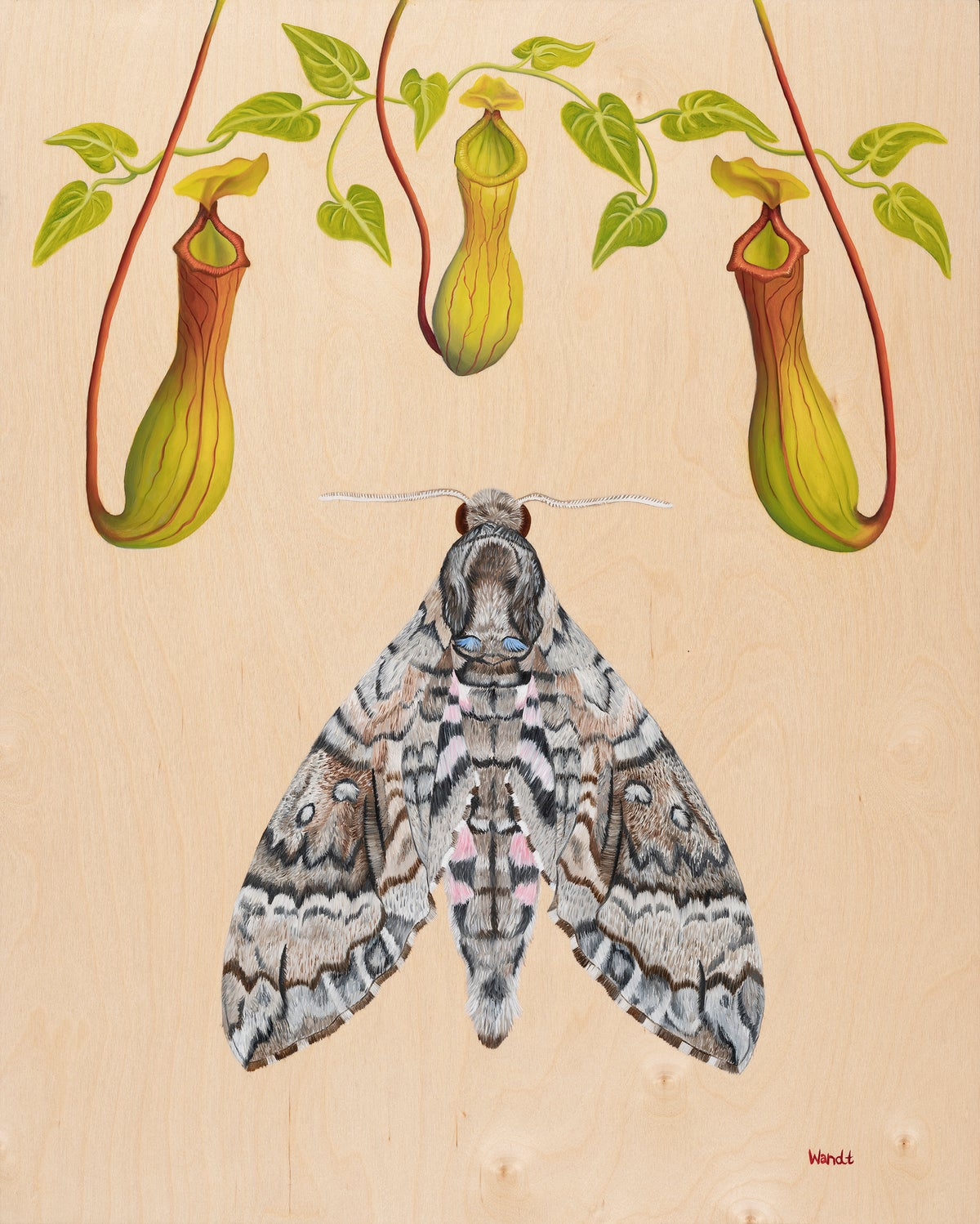 Nepenthes (Giclee Print)