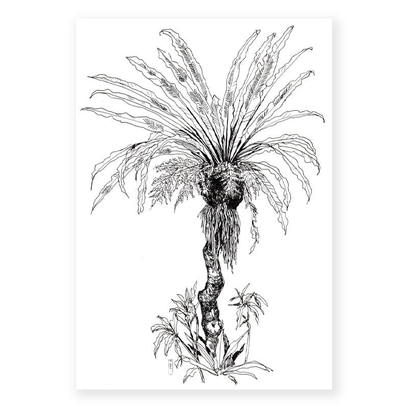 """Image of Original Painting - """"Asplenium nidus - Fougère nid d'oiseau"""" - 21x29,7 cm"""