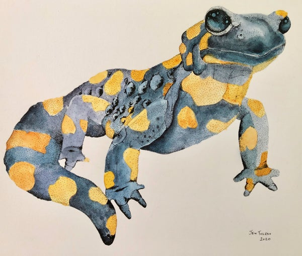 Image of Fire Salamander (Original $200)