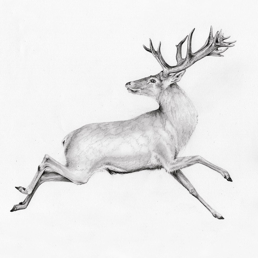 Image of A Stag For You, Beloved