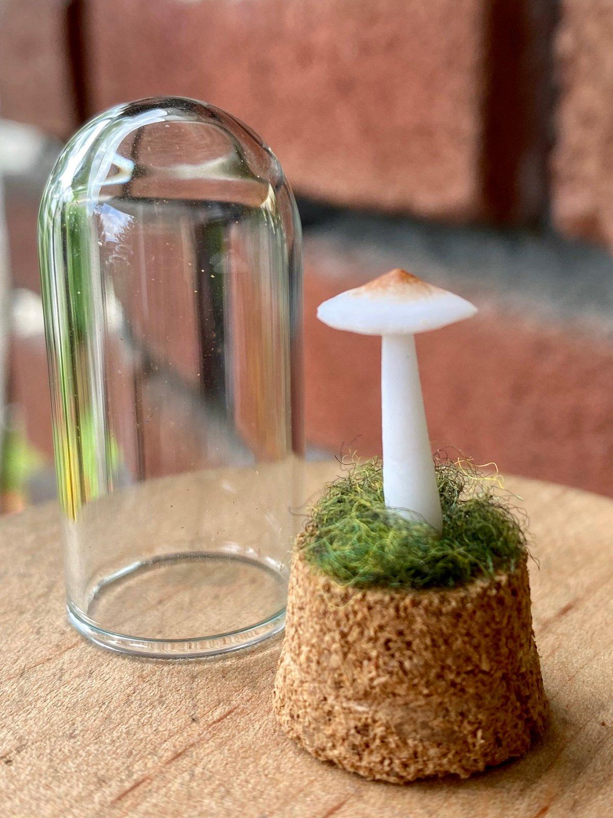Image of Miniature Mushroom Dome - single mini B
