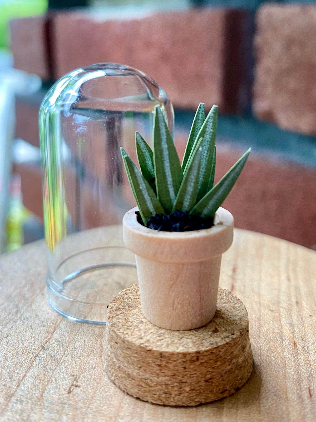 Image of Paper Snake Plant (sansevieria) - B