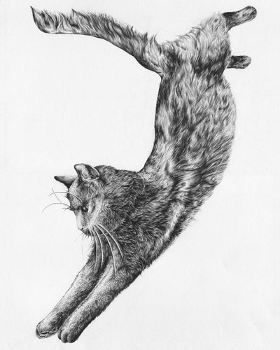 Image of Jumping Cat