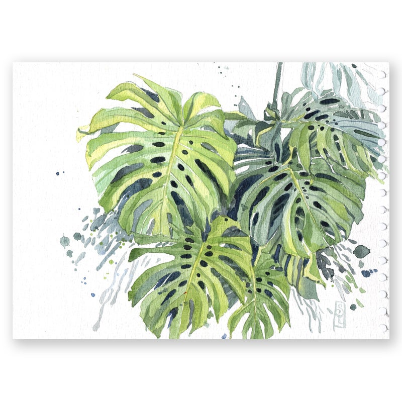 "Image of Original Painting - ""Philodendron monstera"" - 20x30 cm"