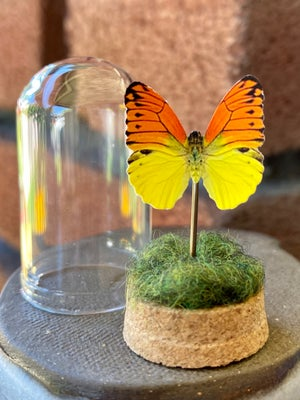 Image of Paper Butterfly Dome - H