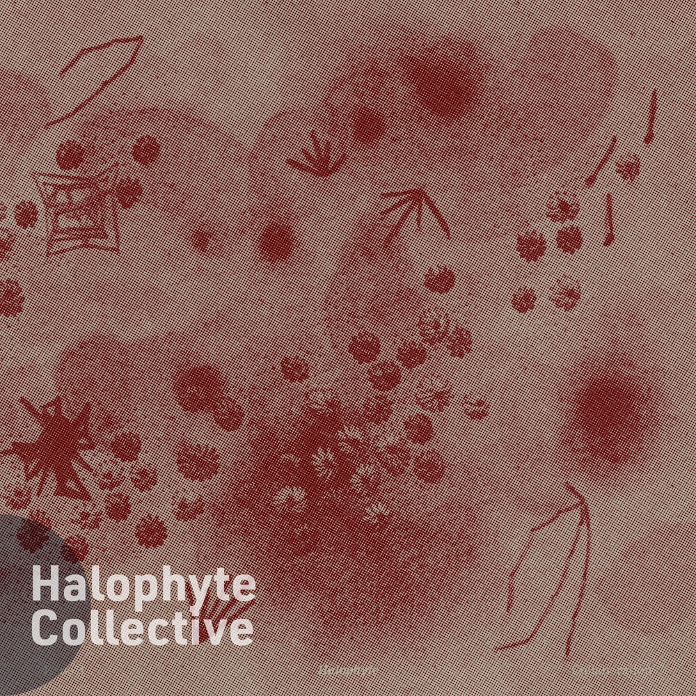 Halophyte: Issue 3