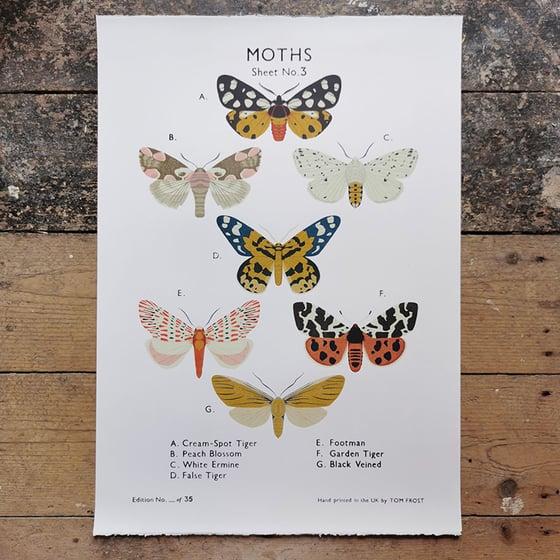 Image of Moth School Chart