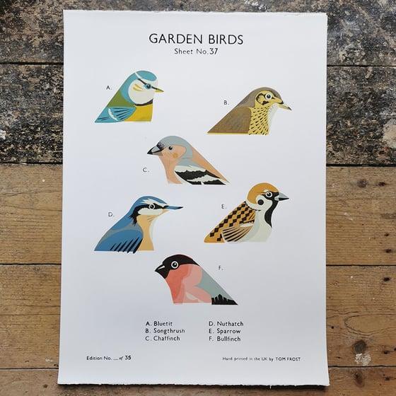 Image of Garden Birds School Chart
