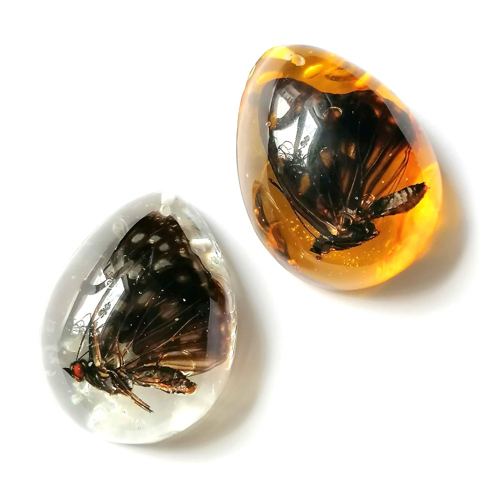 Image of Preserved Butterfly Resin Teardrop Pebble