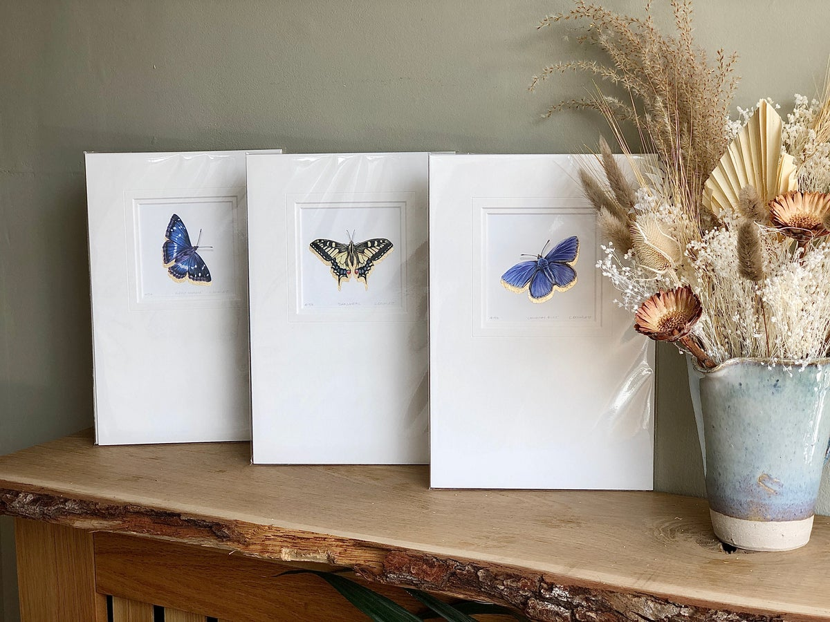 Image of 'Swallowtail Butterfly' Limited Edition Giclee Print