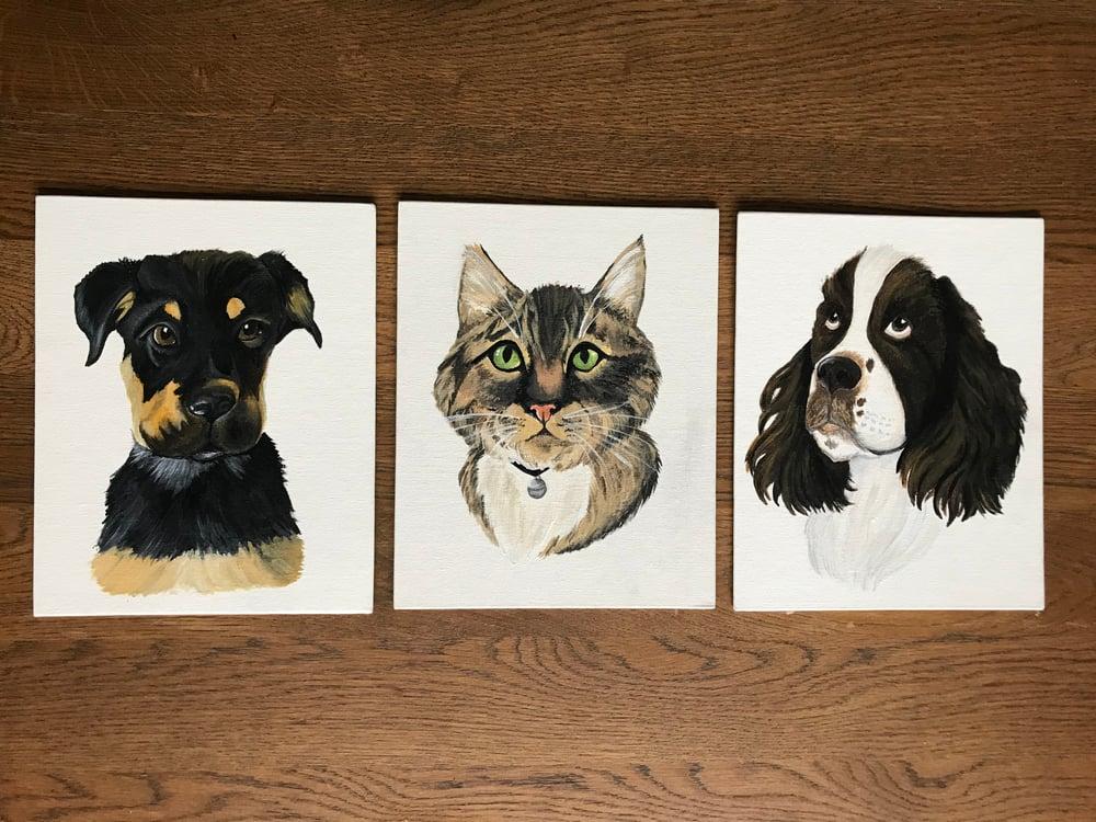 Image of Pet portrait