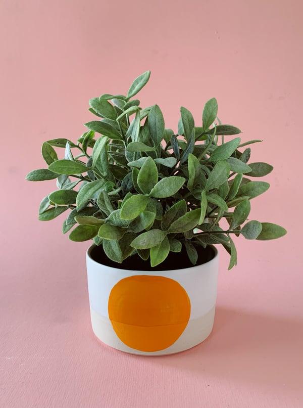 Image of Orange Dot Planter