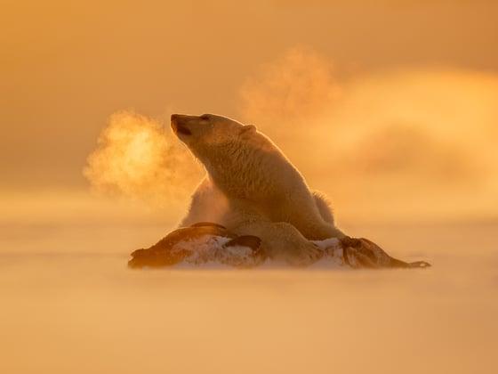 Image of Polar Bear Fine Art Greeting Cards