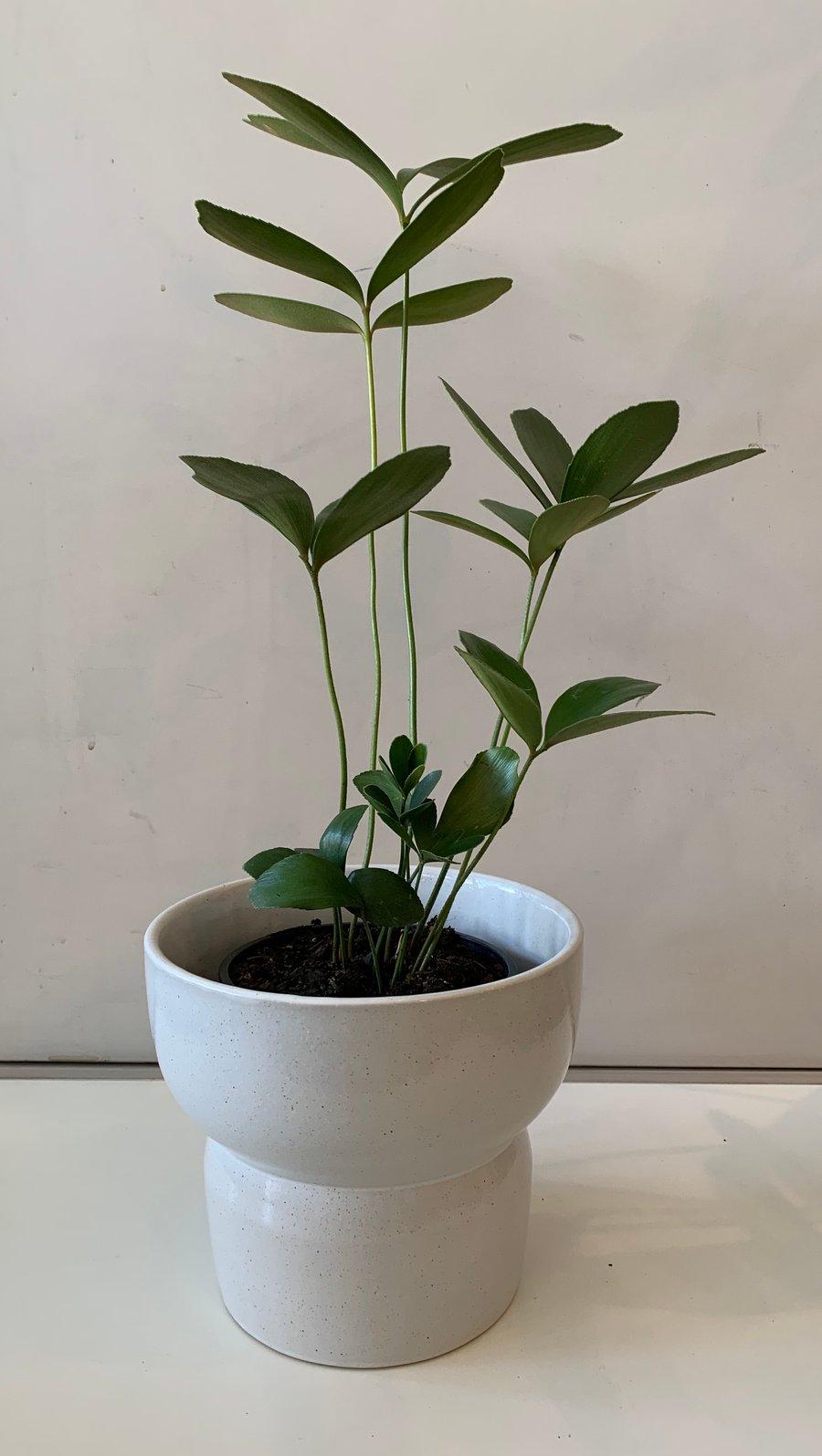Image of Luna pot