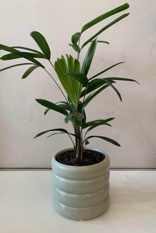 Image of Luna plant pot