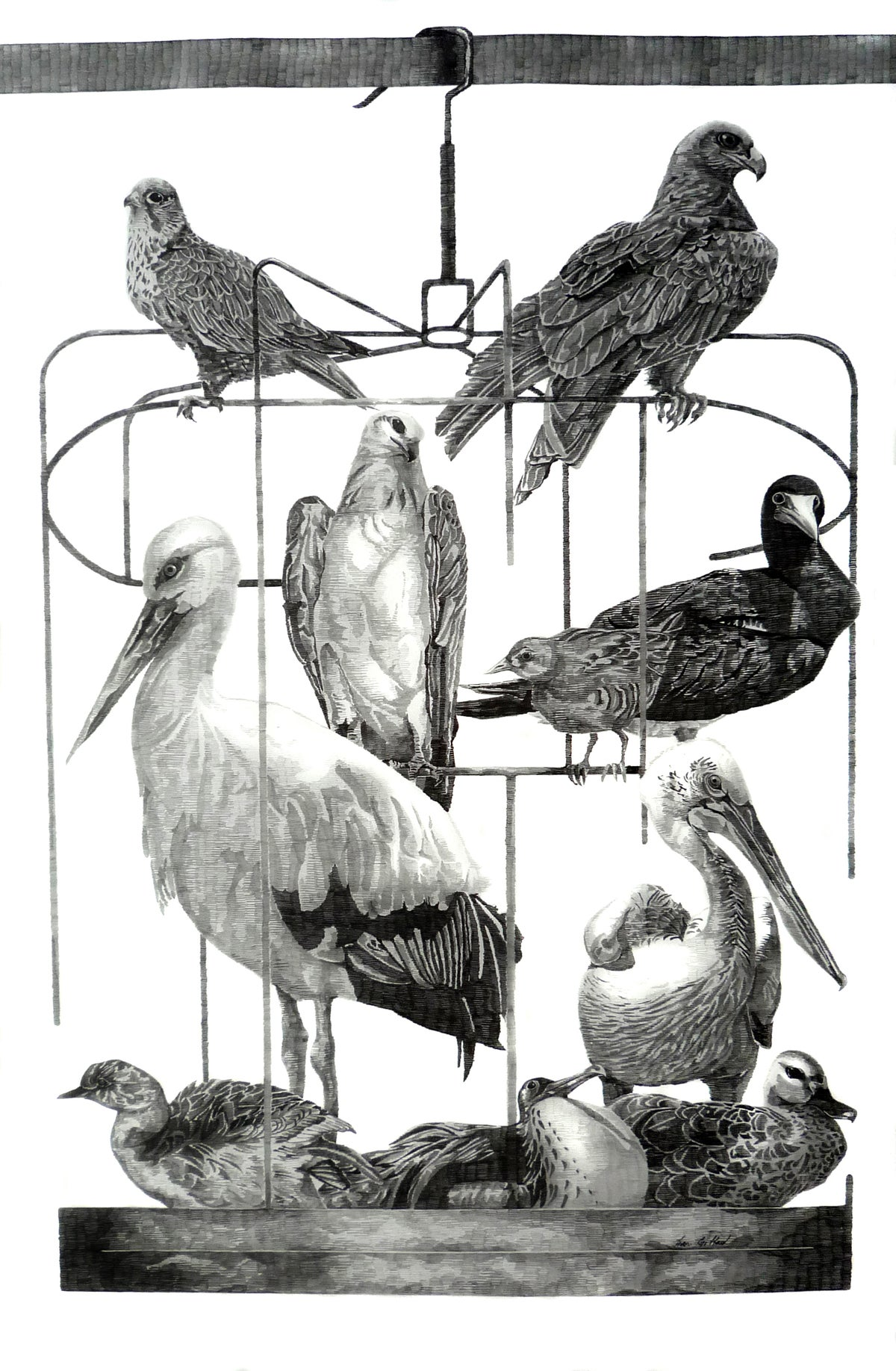 Image of A Collection of Birds from Hong Kong . II