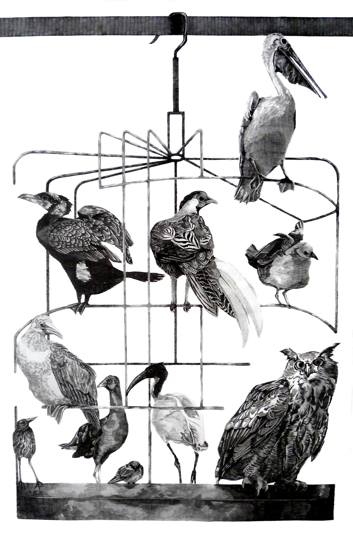 Image of A Collection of Birds from Hong Kong . I