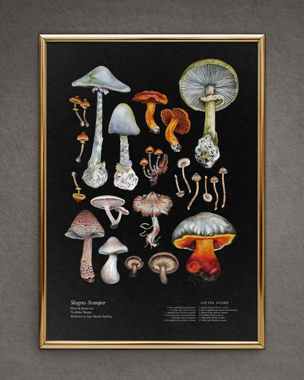 Image of Deadly Mushrooms - Small Poster