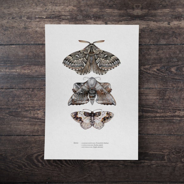 Image of BUTTERFLIES & MOTHS | PRINT 4