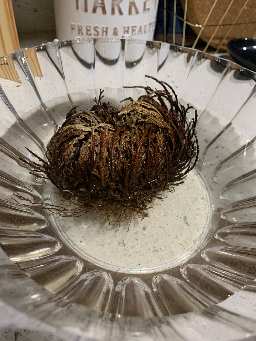 Image of Rose of Jericho Plant
