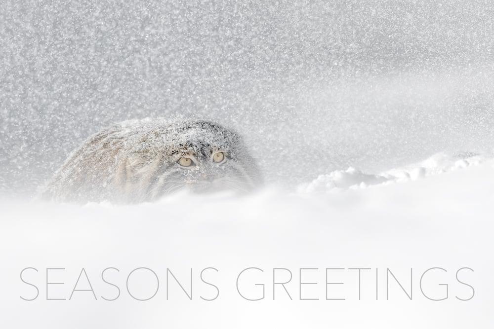 Image of Seasons Greetings Fine Art Greeting Cards