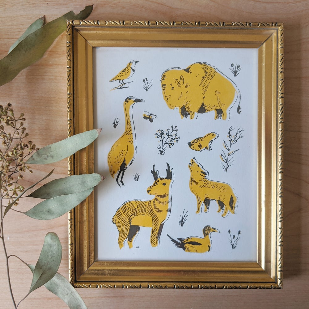 Image of Great Plains Animals Drawings & Prints