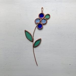 Image of Blueberry Posie no.1