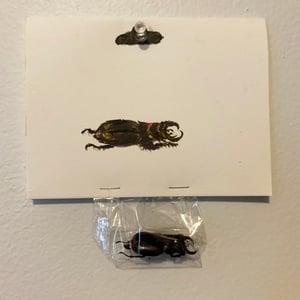 Image of Wierd Beetle
