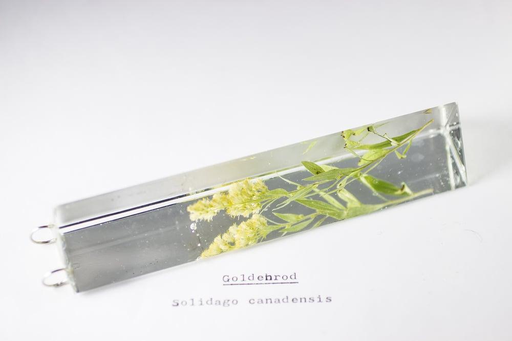 Image of Goldenrod (Solidago canadensis) - Suncatcher Prism