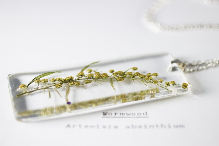 Image of Wormwood (Artemisia absinthium) - Long #1