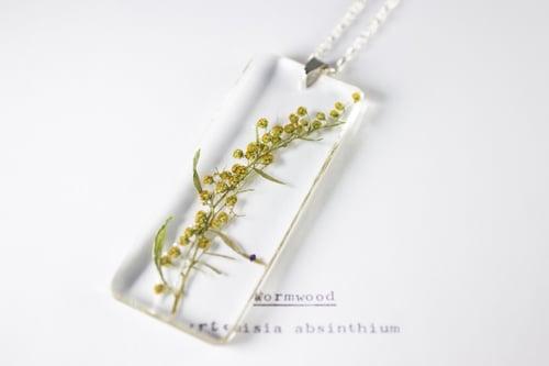 Image of Wormwood (Artemisia absinthium) - Long #1