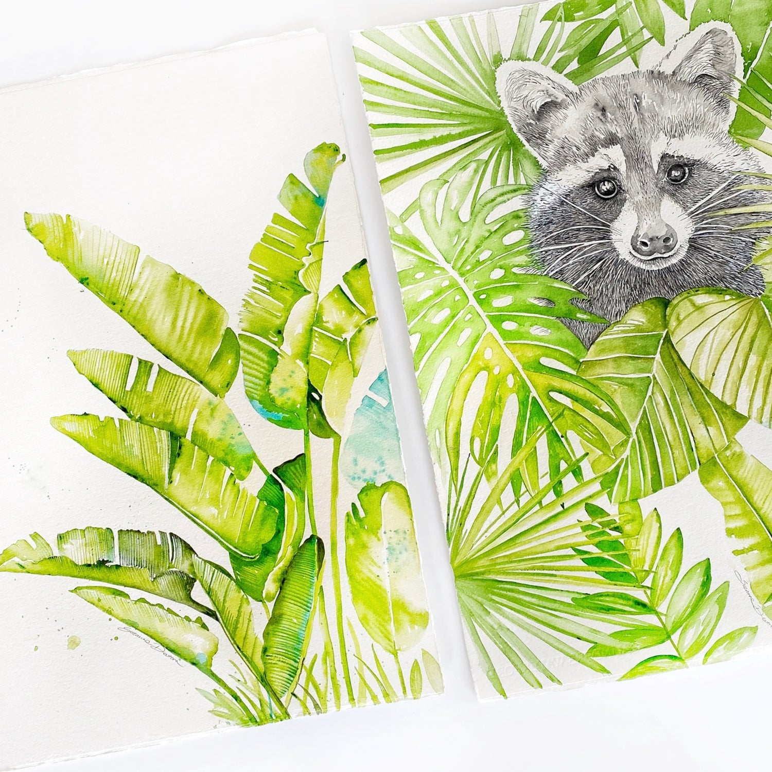 Image of Rocky Racoon - FREE shipping within Australia