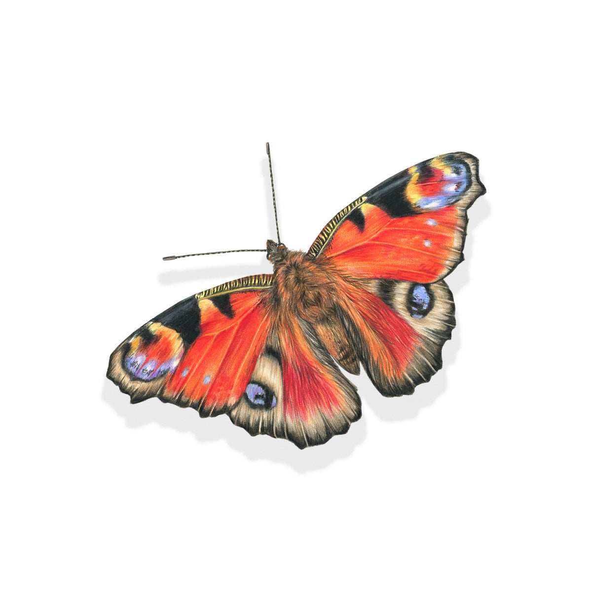 Image of 'Peacock Butterfly' Limited Edition Giclee Print