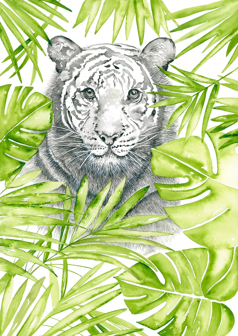 Image of Kora the majestic Tiger - FREE shipping within Australia