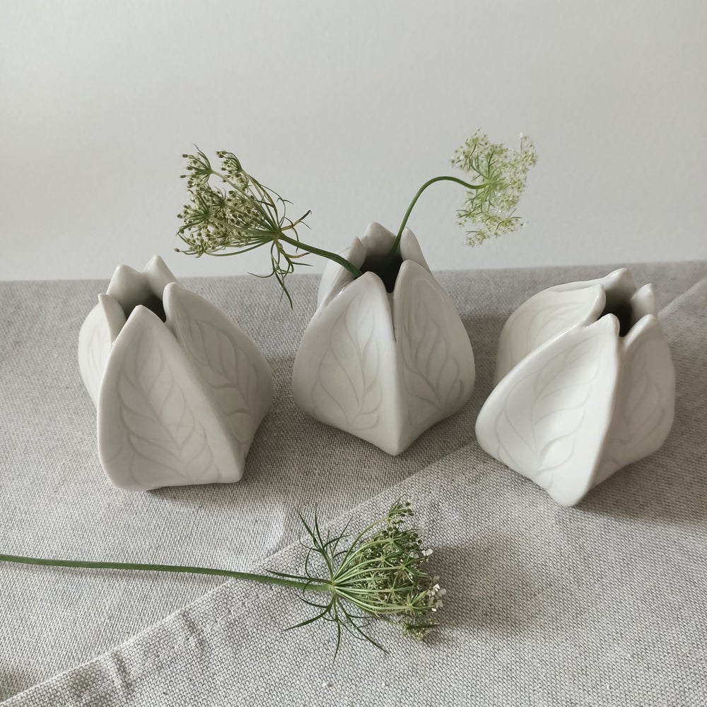 Image of [Physalis] x [Petite Blanche]