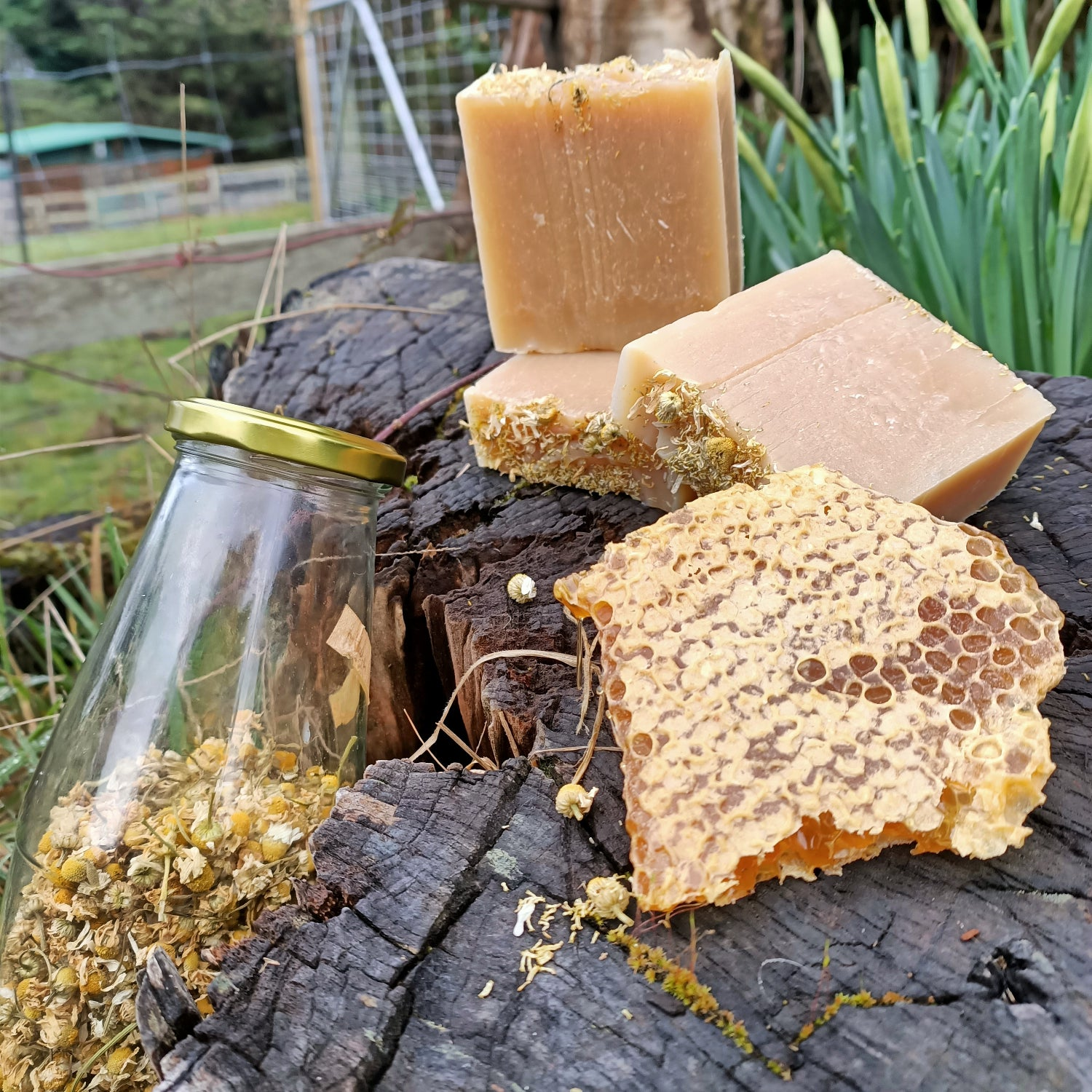 Image of Chamomile and Honey Shampoo and body bar